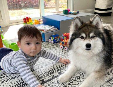 Husky i dziecko stanowią wspaniały duet. Zobacz zdjęcia