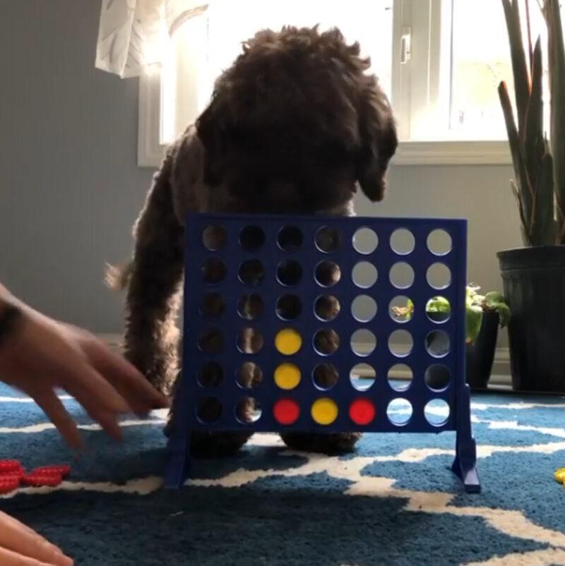 """Pies gra w """"kółko i krzyżyk"""