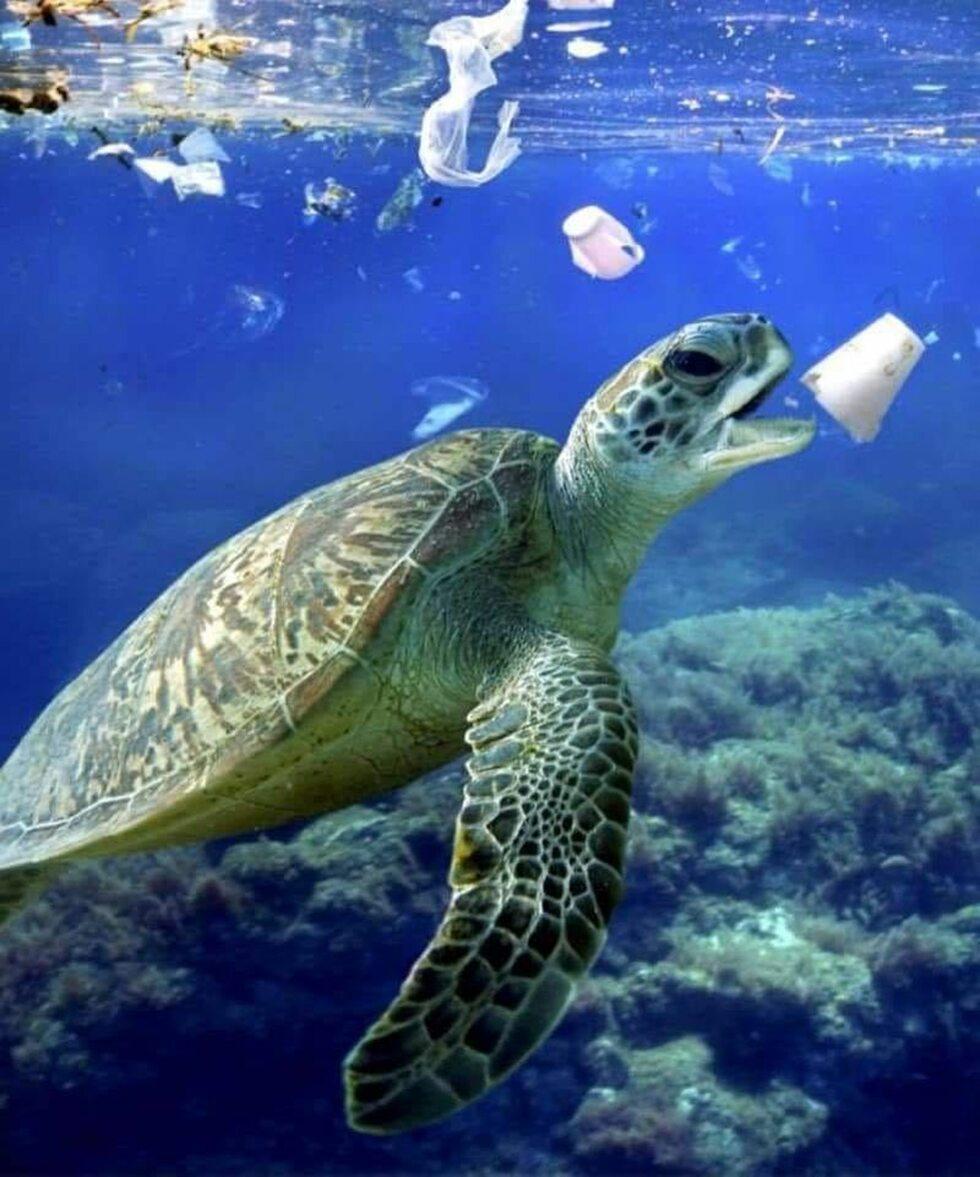 Śmieci z oceanów i zwierzęta - galeria zdjęć